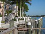 Visitor on Fishing Pier
