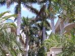 lovely Royal Palms surround the courtyard along with beautiful plants and flowers