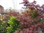 Japanese Maples on the Roof Garden