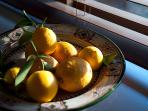 Garden Cottage - lemons from the orchard