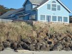 Oceanfront house,guesthouse,hot tub-5star reviews!
