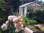 A Peak at the Numerous Beds of Vegetables, fruit and Wonderful Roses