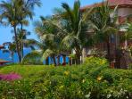 A close up look at the view towards the Pacific Ocean. Potted Gardenias, Blooming Plumeria Trees, Swaying Palms - you...