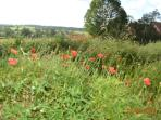 Wild flowers abound in late spring/early summer