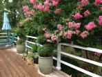 Deck In bloom