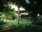 A view of the home from under a giant mango tree, beach side.