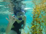 Starfish Cottage, snorkeling with Rosalee
