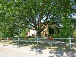 Apartment for 10 persons, with swimming pool , in Florentine Hills
