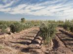 stay at an olive farm with resto bar and farm
