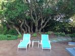 Lounges with Live Oaks for a backdrop