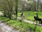 Pony trekking in the forest