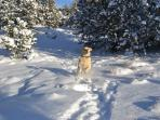 Our yellow lab Ruby loves the snow