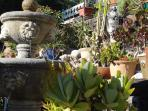 In front of the house: exotic plants, Tuscan fountain