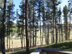 Views of pine hills from cabin deck