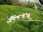 The spring tree flowers