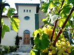 The villa by the vineyard