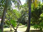Another view of the garden from the beach