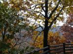 Autumn view from deck