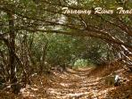 Toxaway River Trail