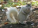 White Squirrels, Christi Fuller Photography, Copyright 2010