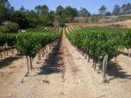 Our local St Jeannet vineyard - walk up from the villa and taste a glass or two!