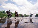 Horse riding near by