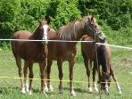 some of our 8 horses, we also have a pony