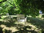 Under the canopy of the spectacular fig tree - a shady spot to sit and read