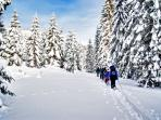 Snowshoeing in the forest