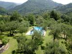 View of swimming pool in garden with olive trees