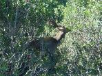 a deer, at 10 minutes from the villa