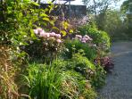 Border flowers in May