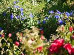 The colourful and peaceful garden