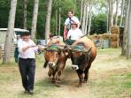 Local country fayre - oxon cart rides