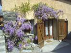 Wisteria outside the family suite in spring