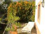 Golden Shower plant on afternoon terrace