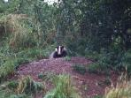 view the badgers from the live wild life tv channels in the Bothy