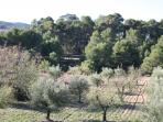View over our Olive and Almond Grove