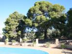 View from pool towards our pine forest