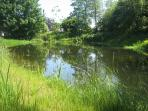Wildlife pond in lower meadow (fenced)
