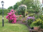 June 2013 and the garden is awake at last.