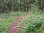 Wembury Woods on the Plym Erme Trail - Visit in July for Plymouth Regatta