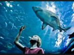 blue reef aquarium newquay fantastic views and watch them feeding the sharks
