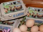 Fresh free-range farm eggs, Angels Rest Farm