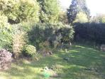 Can you see the visitor in our garden?