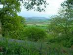 Bluebell woods with Black Mountains behind