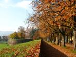 the unique walls of Lucca (20 minutes by car or direct train)
