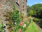 High summer and flowers surround the mill - fancy a walk or a bike ride, or just chill by the river?