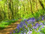 Explore the bluebell woods in spring - this path leads from the mill alongside a mountain stream