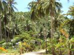 Coconut Groves leading to the Beach